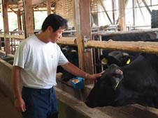 すき亭用の牛を肥育する月岡昭二さん(長野県認定食肉マイスター)